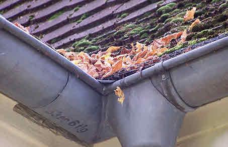 Service Unterhalt Dach